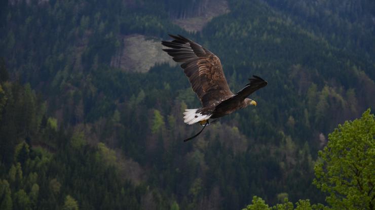Pričom obrovské vtáky